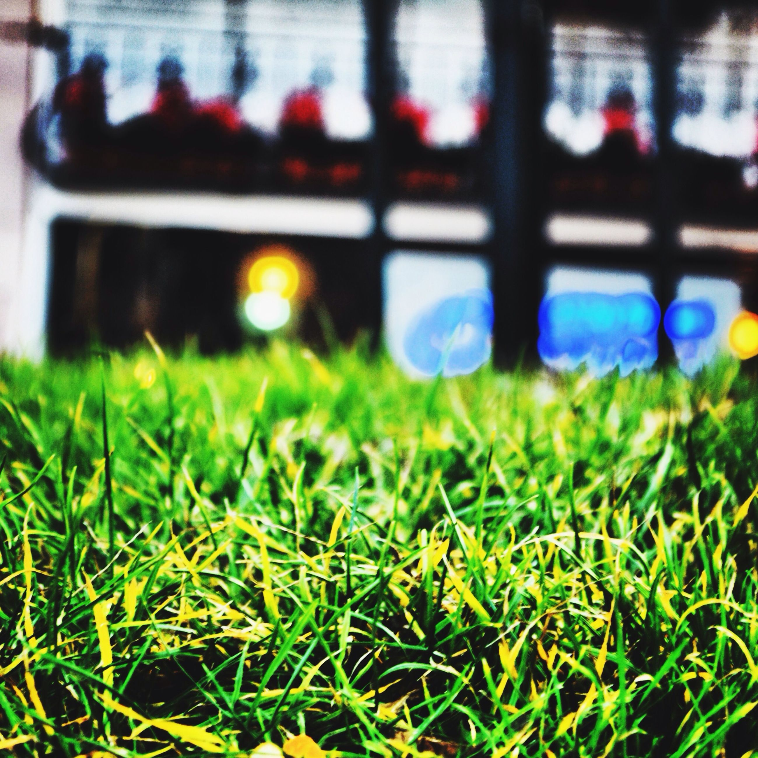 grass, grassy, green color, selective focus, field, focus on foreground, lawn, surface level, close-up, blade of grass, grassland, outdoors, no people, day, nature, park - man made space, green, growth, plant, incidental people
