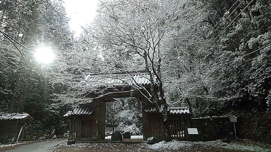 Snow First Snow Japan Nature_collection
