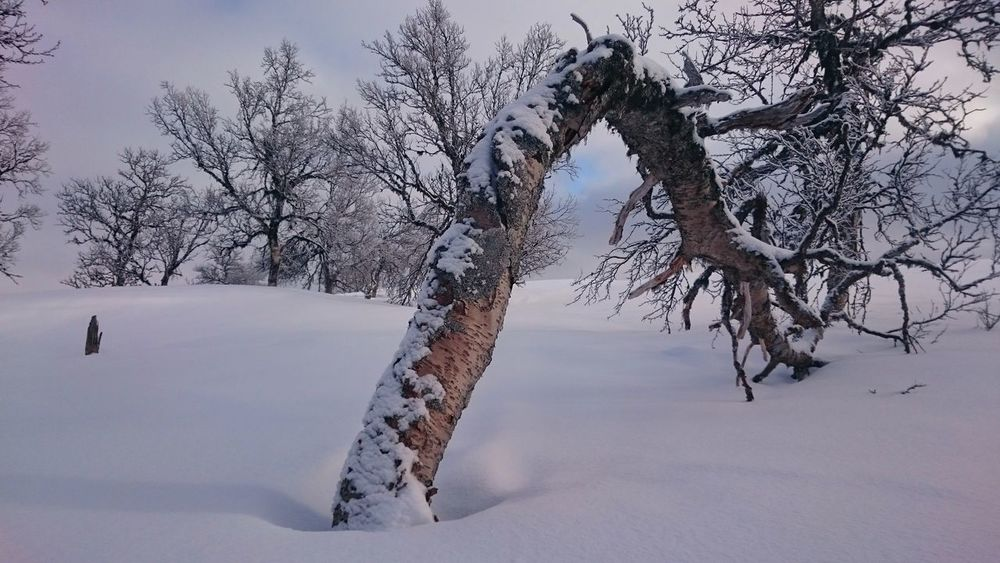 Cold Temperature Snow Tree Winter Nature No People Bare Tree Landscape Beauty In Nature Outdoors Sky Day Grövelsjön