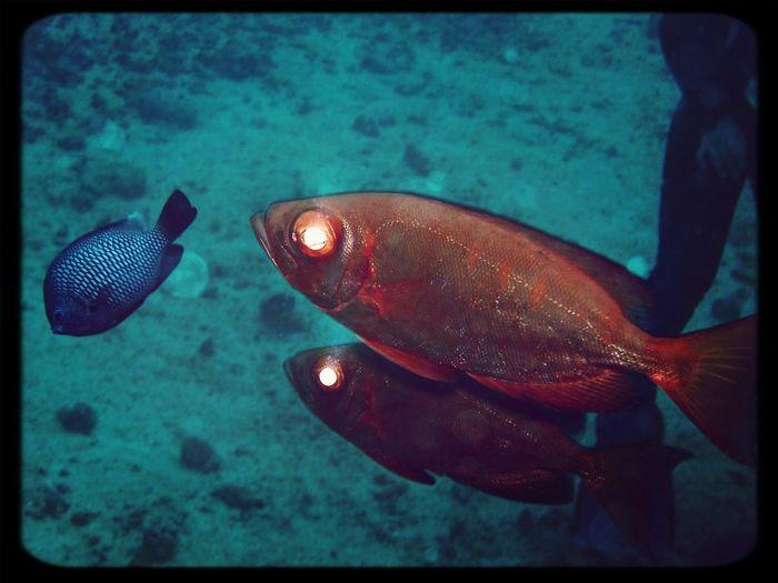 Under The Sea Scubalife