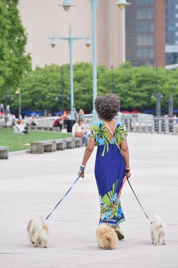 Afrohair Afro Walking Walking The Dog Walking The Dogs Dogs Dogs Of EyeEm Dogslife The Essence Of Summer Captured Moment Nikonphotography Nikond3300 Nikon D3300 Outdoor Photography Enjoying The View Enjoying The Moment Places I've Been Capture The Moment Enjoying Time Park Enjoying The Sights Enjoying Life NYC Street My View NYC Photography
