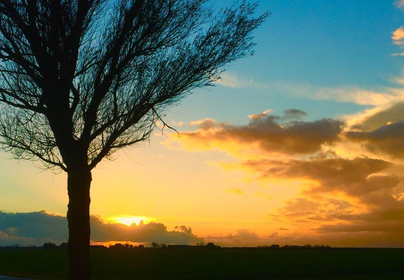 Sunset Sky Tree Silhouette Nature Orange Color Beauty In Nature Cloud - Sky No People Outdoors Scenics Landscape Day