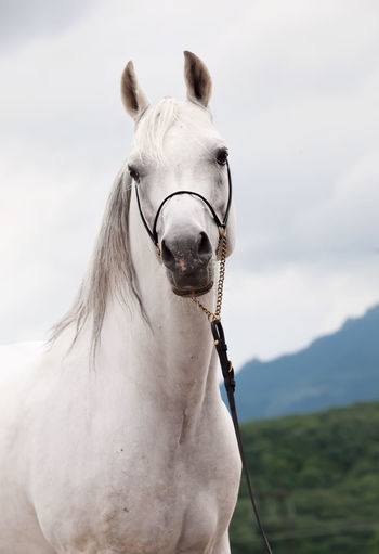 Portrait of horse standing against cloudy sky