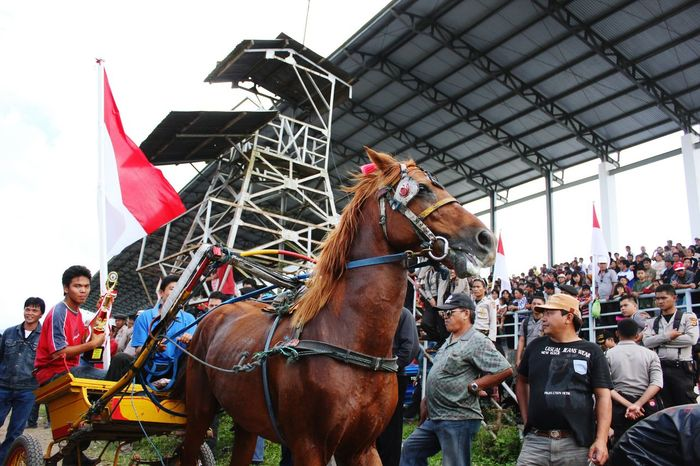 """Old pic """"The Champions. Horse Racing , Horse Race , VillagePeople , Proud, Minahasa , INDONESIA, Animal, Sports"""