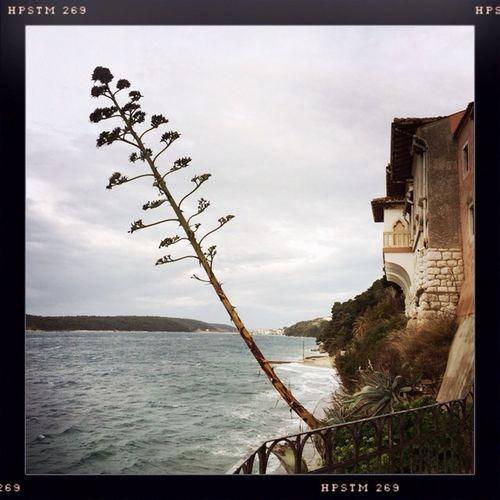 Iphonephotography Hipstamatic Hipstamood Island Rab Croatia