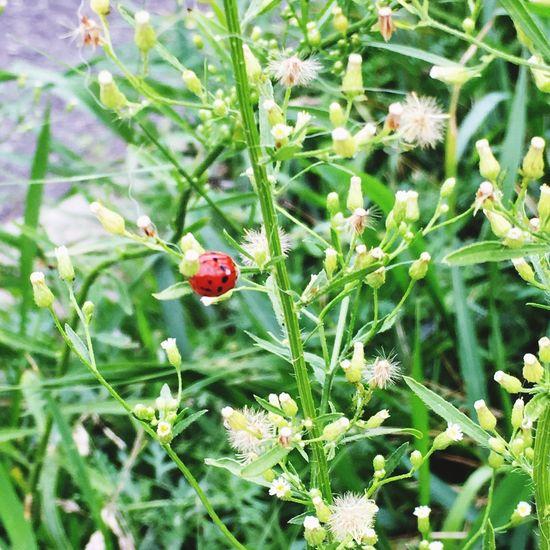 Lovely Ladybug Nature