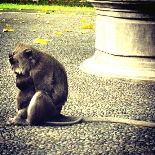 Candid Photography Monkey Nurture Nature Expressions The Photojournalist - 2015 EyeEm Awards Animal Photography