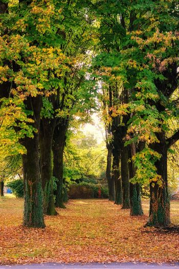 autunno e colori A6000 Sony Autumn Lucariva Italy Autunno🍁 Boschetto Alberi Autumncolours Coloriautunnali Foglie Trees A7r2 Tree Field Leaf Grass