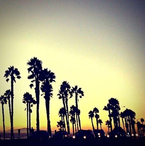 Palm Trees EndlessLove Lights Taking Photos Magic Moments Enjoying The Sun Aroundtheworld Hello World MyPhotography Sunset_collection Waves, Ocean, Nature Roadtrip Magic Color Be Happy Relaxing Hello World Ocean View California Love Huntingtonbeach View