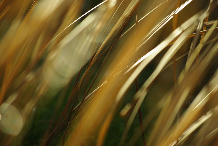 Growth Plant Nature Agriculture Backgrounds Field Selective Focus Land Gold Colored No People Full Frame Landscape Rural Scene Grass Close-up Yellow Beauty In Nature Sunlight Outdoors Abstract Abstract Backgrounds