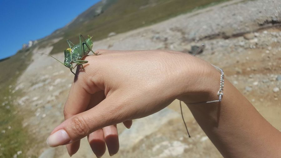 dream Grasshopper Human Hand Summer Insect Close-up Fingernail Skin