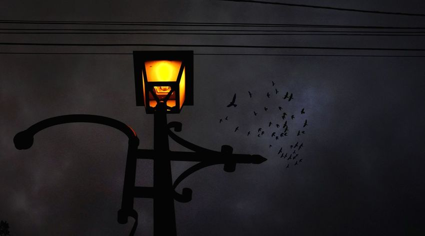 Illuminated Night Black Color Orange Color Black Sky Nightphotography Shadows & Lights Birds Birds Of EyeEm  Streetlights Streetlights And Sky EyeEmNewHere