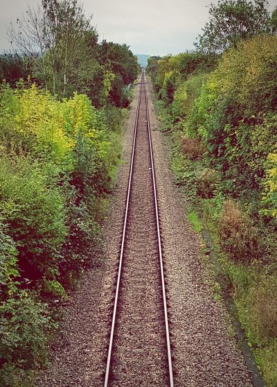 Lost In The Landscape straight The Way Forward Outdoors Railroad Track Nature No People Tree Rail Transportation Sky Growth Transportation Day Grass Ilovephotography Taking Photos Autumn Beginnerphotographer Long Straight Forward