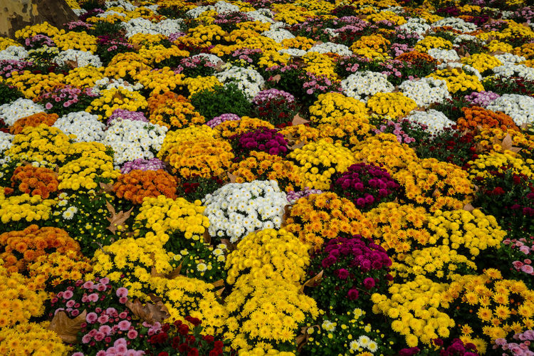 High angle view of multi colored flowering plants