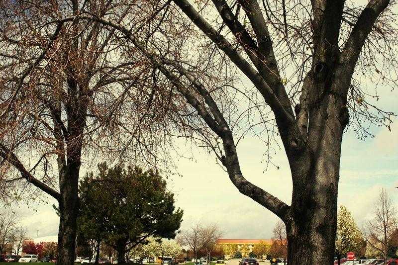Neighborhood Map Boise, I'd Tree Outdoors Street Cityscape
