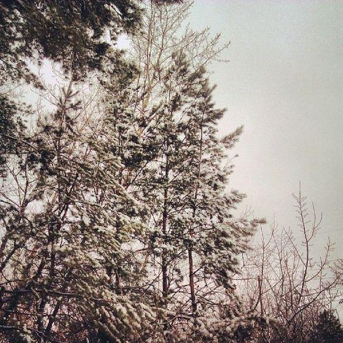 Зима вернулась Vrn