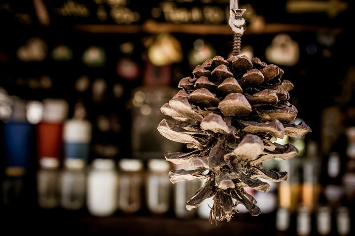 Dark brown pine cone with blurred background. Autumn Brown Conifer  Decor Design Dries Pinecone Season  Texture Blur