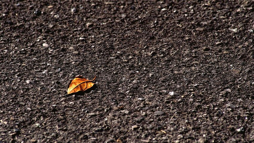 Break The Mold Asphalt Leaf Brown Veins Veins In Leaves Fall Autumn Change Day Outdoors No People Autumn Nature Close-up Break The Mold
