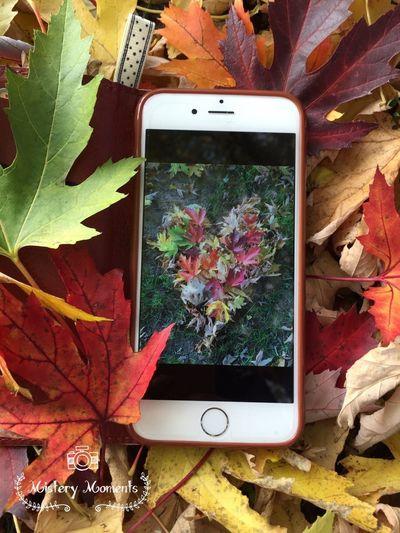 AutumnMoments Autumn Autumn Colors EyeEm Nature Lover Eye4photography  Hello World IPhoneography Iphonephotography IPhone Nature Photography