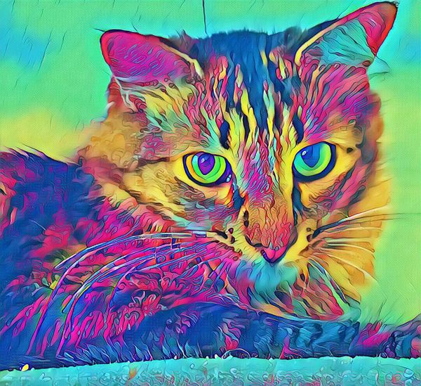 Trying new Effects with Vinci App Effects & Filters Multi Colored Domestic Cat Close-up Animal Themes One Animal Portrait Indoors  Cat Looking At Camera Feline Domestic Animals Whisker Pets Animal Head  Front View Zoology At Home Animal Vibrant Color EyeEm Gallery EyeEm Best Shots Getty Images