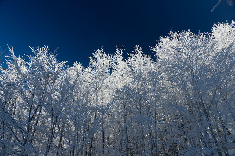 Low angle view of snow covered trees against sky