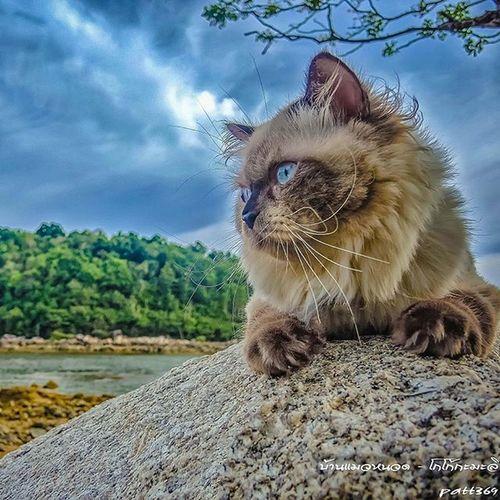 sarsi catบ้านแมวหนวด แมว Cats Chill Holiday Beach Sea Sky Sunset Clouds Neko Stone Beach Amzingthailand Phuket Thailand Trip Travel Island Smile Nikon