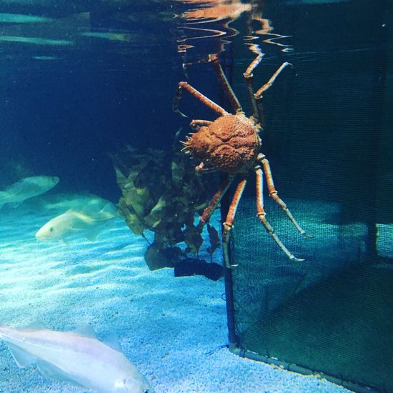 Spider crab Animal Themes Water Zoology Nature Day No People Freshness