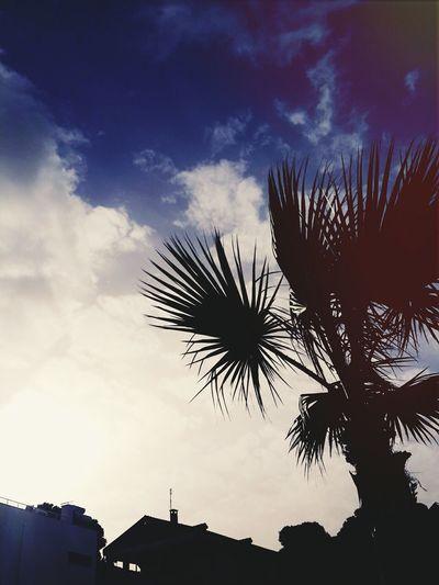 Didimaltinkum Sea And Sky Happly