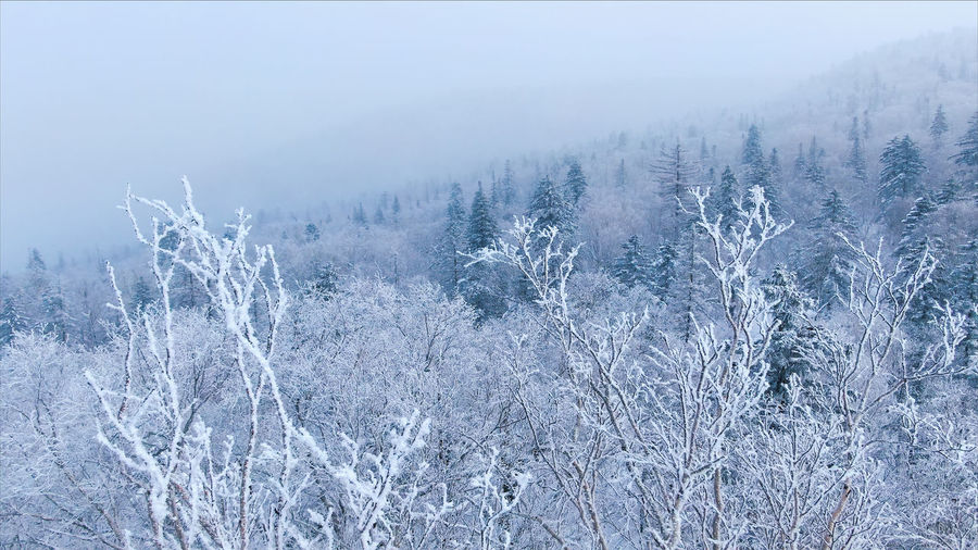 Scenic view of snow covered land