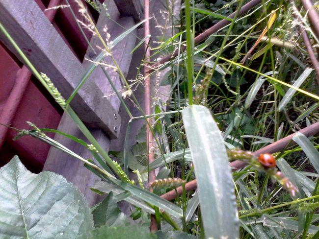 Ladybug Ladybeetle Green Plants Grass Unedited Wolfzuachis Eyeem Market
