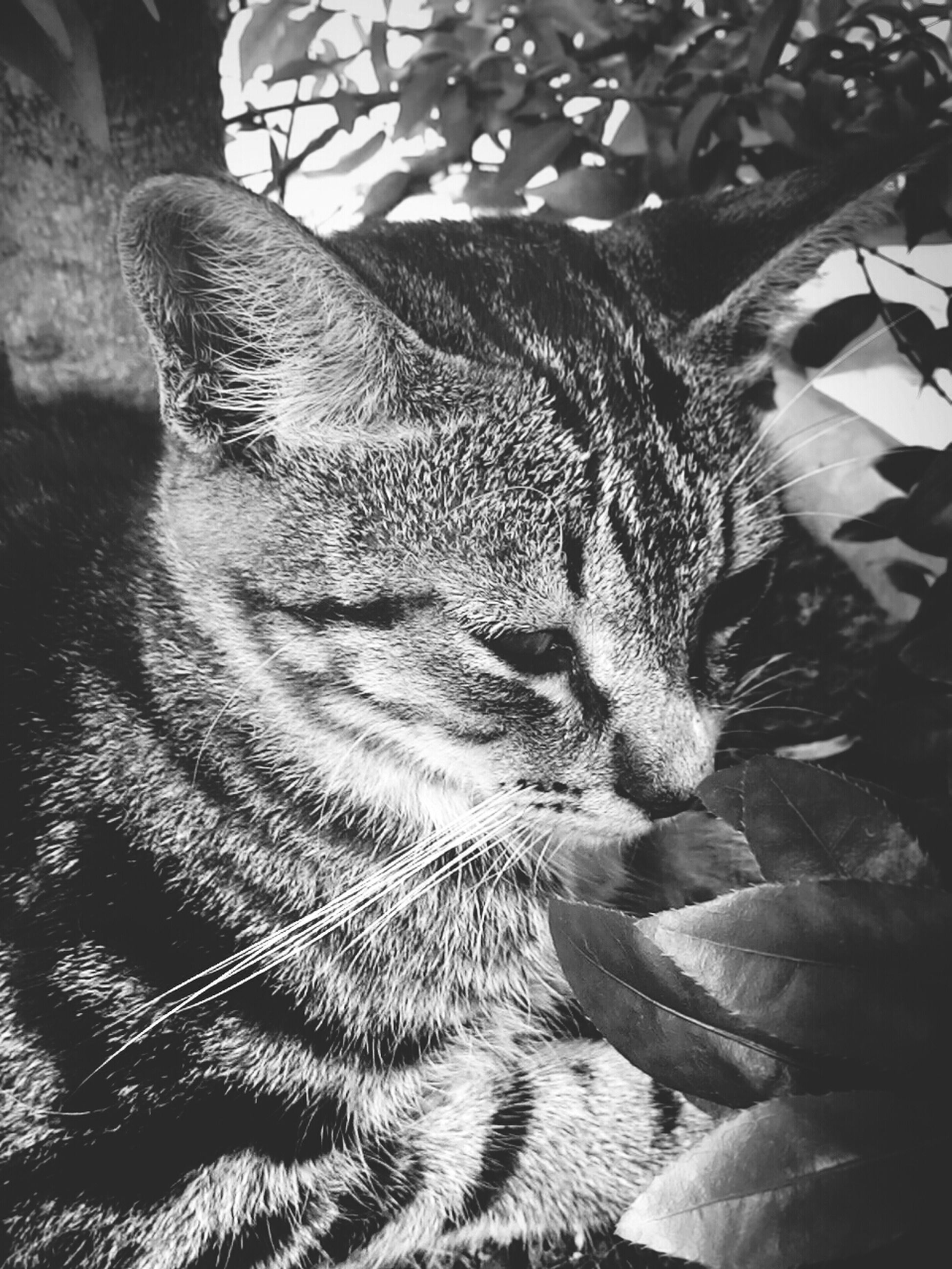 animal themes, one animal, mammal, domestic animals, domestic cat, close-up, pets, feline, cat, whisker, no people, high angle view, sunlight, day, indoors, relaxation, animal head, sleeping, nature