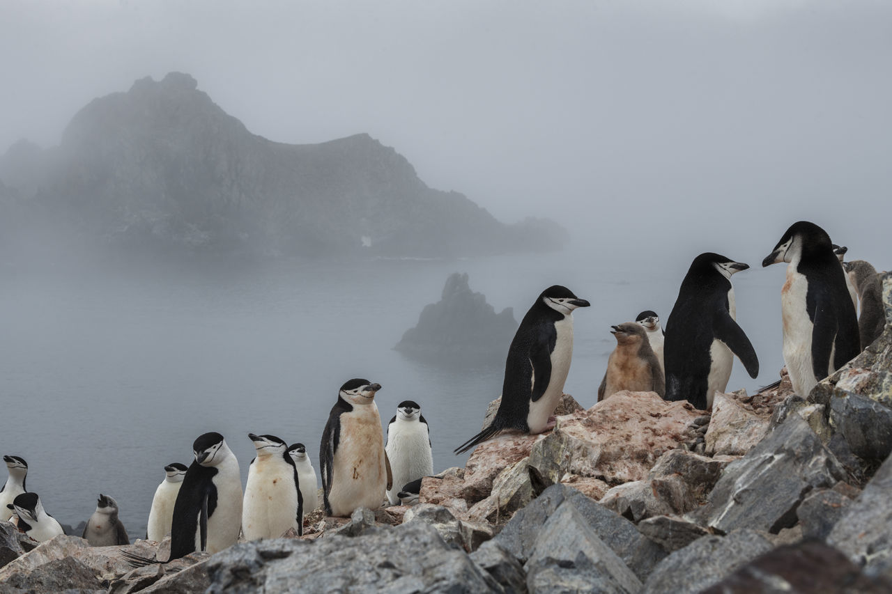 group of animals, rock, animals in the wild, animal themes, rock - object, vertebrate, bird, animal wildlife, animal, penguin, solid, fog, nature, mountain, sky, water, beauty in nature, no people, outdoors