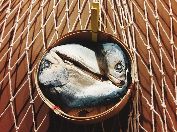 Close-up Fish
