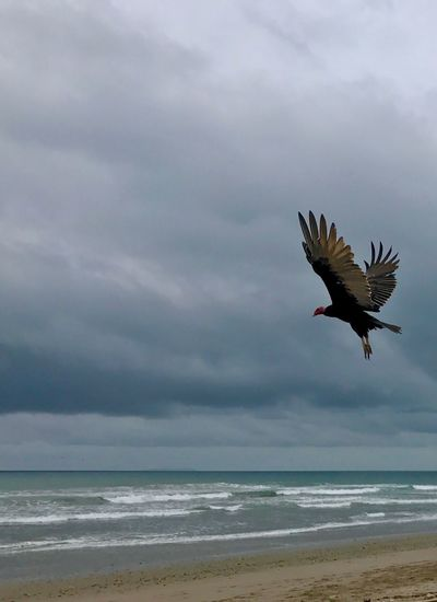 Bird Sea Flying Beach Animals In The Wild One Animal Nature Animal Wildlife Spread Wings Beauty In Nature Ocean Nature Ecuador Sand & Sea