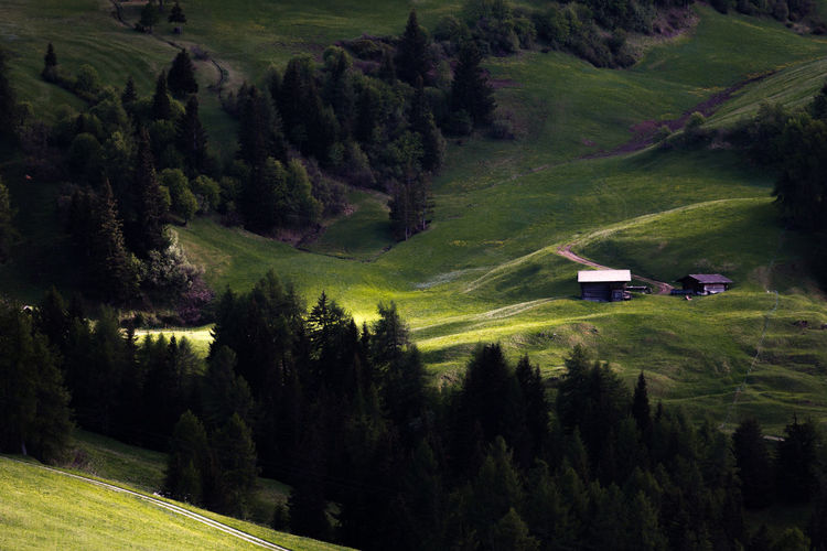 Alps Conifer Forest Contrasts Green Color Landscape Light And Shadow Mountain Mountain Farmers Mountain Pasture No People Non-urban Scene Scenics - Nature Tranquil Scene Tranquility