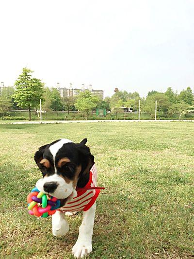 Everyday Education catch ball!! Dog