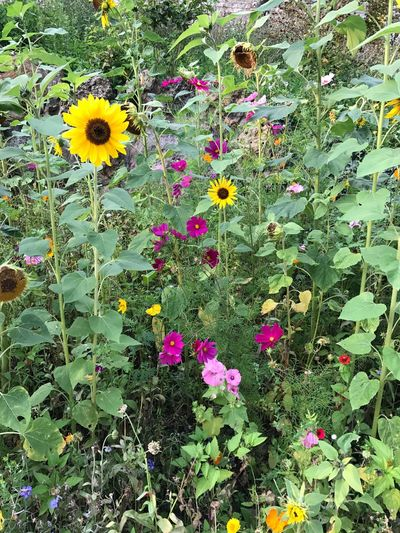 Grass And Flowers Colorful Flowers Wild Flowers Flowers Flower Growth Plant Yellow Nature Fragility Blooming Petal Flower Head Freshness Outdoors Beauty In Nature