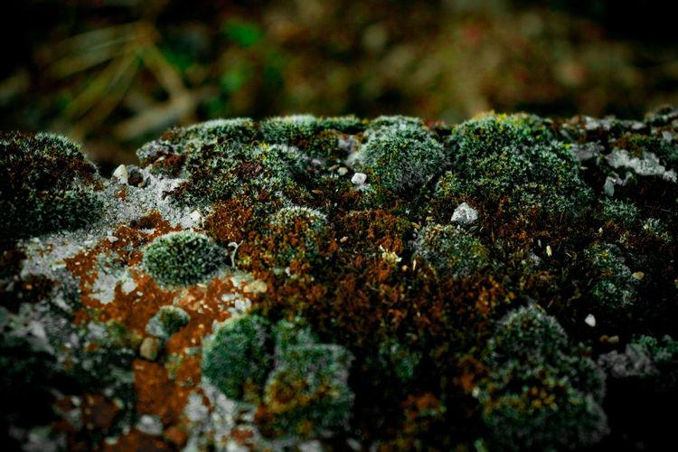 Close-up of mushrooms growing on rock