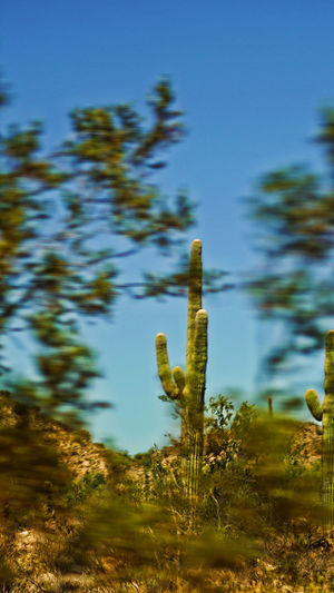 Beauty In Nature Cactus Close-up Day Green Color Growth Nature No People Outdoors Plant Saguaro Cactus Sky Tranquility Be. Ready.