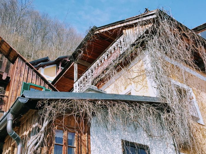 Tree_collection  Tree And Houses In Winter Tree And House Hallstatt So Artistic Art is Everywhere Europe Trip Building And Trees Old Architecture Look What I Found House Building Exterior Built Structure