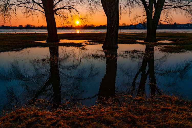 Reflection of bare trees in lake at sunset