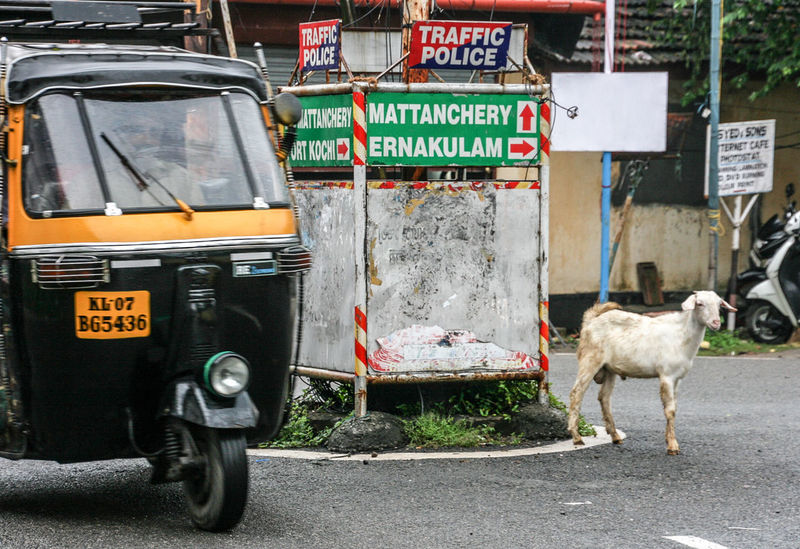 Animal Themes Goat India Indian Kochi Outdoors Pets Reiselust Street Street Photography Streetart Streetphotography Traffic Traffic Police  Travellover Travellovers Tuk Tuk On The Road Road Indian Road Travel The Street Photographer - 2017 EyeEm Awards Mobility In Mega Cities