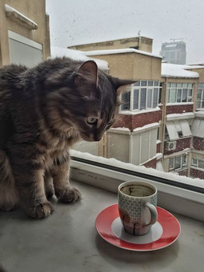 Domestic Cat Domestic Animals Pets One Animal Animal Themes Feline Cat No People Day Furry Fur Cute Animal Grey Gray Whisker Funny Drink Fortune Telling Fortune Teller Coffee