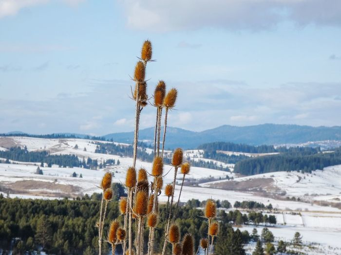 Plants growing on land against sky during winter
