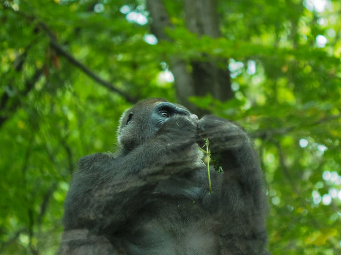 Low angle view of monkey on tree in forest