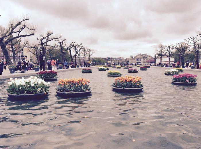 Make Magic Happen Amsterdam Tulips Floatingtulips Spring Flowers Water Cool Things