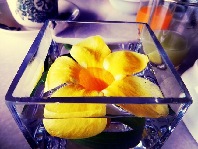 Flowers Water Nature Things In A Glass Breakfast Table
