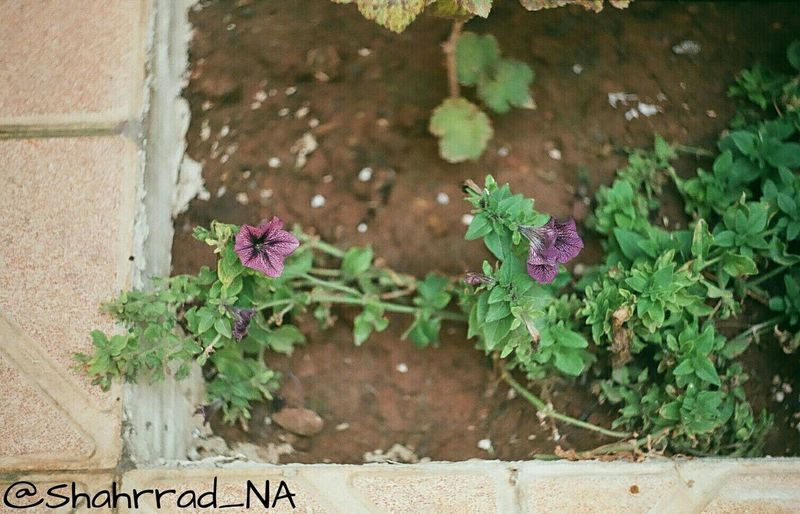 Art هنر Photography Photo Flower Shahrrad_NA