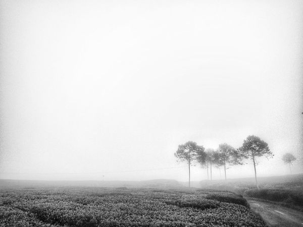 under the morning fog Field Growth Agriculture Rural Scene Outdoors