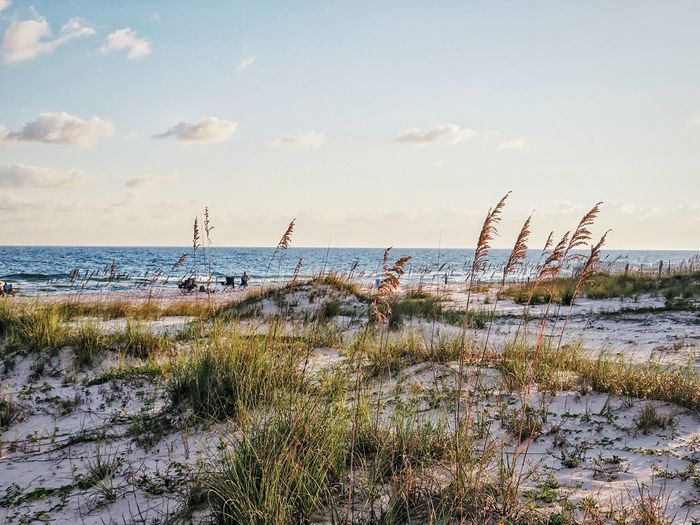 beach sand dunes Water Sea Beach Sky Horizon Over Water Landscape Grass Reed - Grass Family Marram Grass Coast Shore Seascape Calm Tranquility Coastal Feature Surf Ocean Scenics Wave Tide Sand Dune Tranquil Scene Low Tide